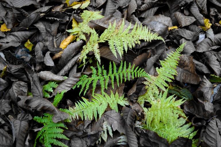 leaves_by_alyo-d3bp66c