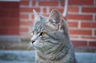 mimi_cat_by_alyo-d3co3f4