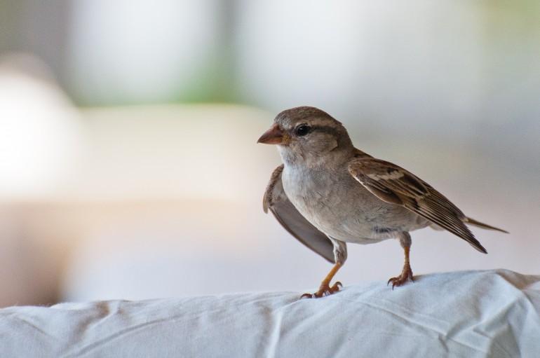 Bird on white chair