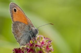 metulj stack