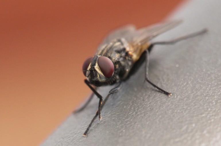 Fly Macro (explored)