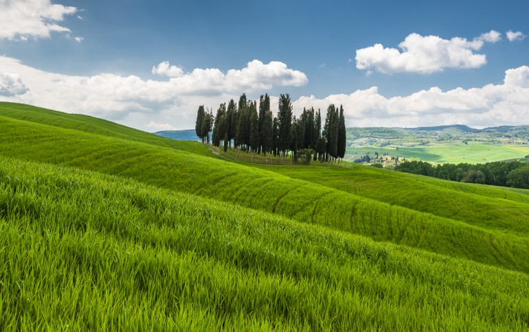 Lonely Cypress Trees